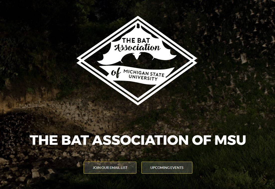 bat association of msu student led education and conservation at michigan state university