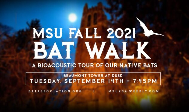 MSU Fall 2021 Bat Walk, a Bioacoustic Tour of Our Native Bats, Beaumont Tower at Dusk. Tuesday September 14th, 7:45 PM.